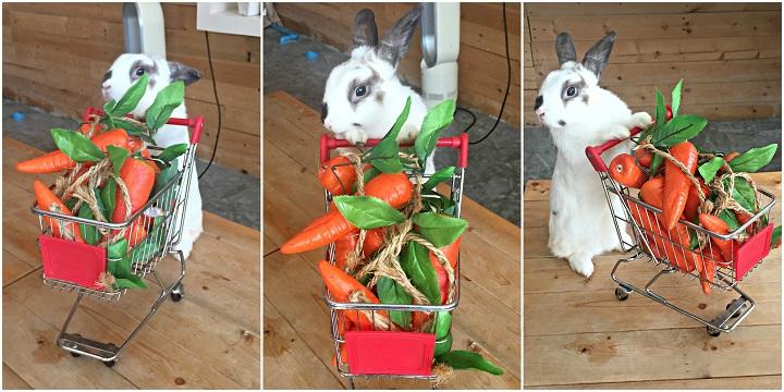 rabbitocafe-c1