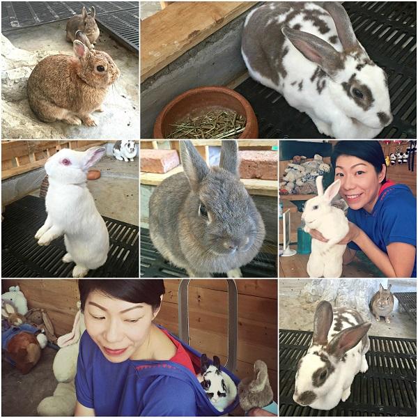 rabbitocafe-c2r